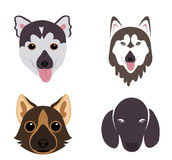 Vector - The big vector set of dog breeds  icons Royalty Free Stock Image