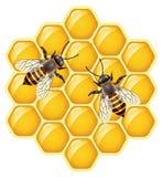 vector bijen op honeycells Stock Afbeeldingen
