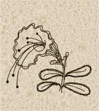 Vector Bild einer Blume in der Weinleseart Lizenzfreie Stockbilder
