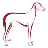 Vector Bild eines Hundes (azawakh) Lizenzfreie Stockbilder