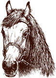 Kopf des Pferds Lizenzfreie Stockbilder