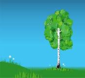 Vector birch. Spring landscape with single birch. Vector illustration Stock Photo