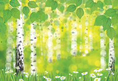 Vector birch forest on spring bokeh background. Stock Image
