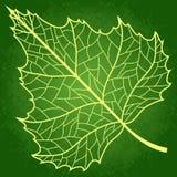 Vector birch leaf. Vector birch green silhouette leaf on a green Stock Photos
