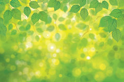 Vector birchs leaves on spring  bokeh background. Royalty Free Stock Image