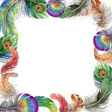 Vector bird feather frame from wing. Stock Image