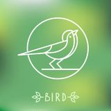 Vector bird icon in outline style. Abstract emblem on green background Stock Images