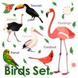 Vector bird icons. Colorful realistic birds. Educational material vector illustration