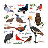 Vector bird icons. Colorful realistic birds. Owl and pheasant, bullfinch and crane stock illustration