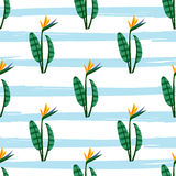 Vector bird of the paradise flowers seamless pattern. Royalty Free Stock Photos