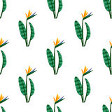 Vector bird of the paradise flowers seamless pattern. Royalty Free Stock Photo