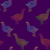 Vector bird seamless pattern. Vector colorful bird seamless pattern on purple background Royalty Free Stock Image