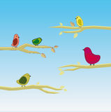 Vector bird set 5 Royalty Free Stock Photo