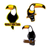 Vector bird Toucan Royalty Free Stock Photo