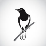 Vector of bird on white background. Oriental Magpie Robin. Stock Photography
