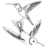 Vector birds in black and white Stock Image