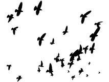 Vector Birds in the Sky - Peace to the World. Silhouettes of pigeons forming a V-formation high up in the sky. Black and white. Low angle view Royalty Free Stock Images