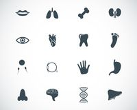 Vector black  anatomy  icons Stock Images