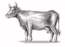 Vector black cow Royalty Free Stock Photo