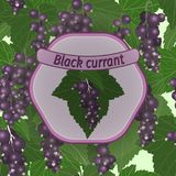 Vector black currant label Stock Photography