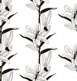 Vector Black Seamless Pattern with Drawn Lilies. Vector Black Decorative Seamless Background Pattern with Drawn Flowers, Lilies. Hand Drawn. Vector Illustration Stock Photos