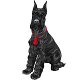 Vector black Giant Schnauzer dog sitting Royalty Free Stock Image