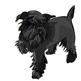 Vector Black Miniature Schnauzer dog. Dog breed Miniature Schnauzer black Royalty Free Stock Photos
