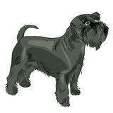 Vector Black Miniature Schnauzer dog Stock Photography