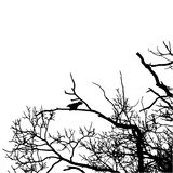 Vector black raven silhouette of a bare tree. Black crow silhouette image on white background. Vector illustration Royalty Free Illustration