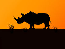 Vector black rhino silhouette background sunset Stock Image