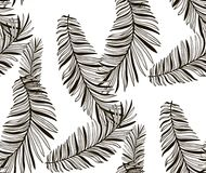 Vector Black Seamless Pattern with Drawn Fern Leaves Stock Image