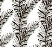 Vector Black Seamless Pattern with Drawn Fern Leaves Royalty Free Stock Images