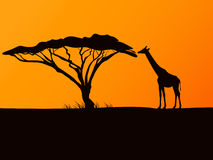 Vector black silhouette of a giraffe and acacia royalty free illustration