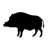 Vector black silhouette of the wild boar Stock Photography