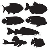 Vector black silhouettes of fish. Fish icons set Royalty Free Stock Photography