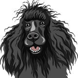 vector Black smiling dog Poodle breed Royalty Free Stock Photos