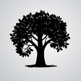 Vector Black Tree Silhouette. Vector Black Tree  on White Background Royalty Free Stock Image
