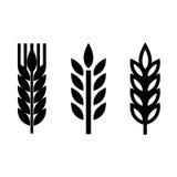 Vector black wheat ear spica icons set Stock Photo