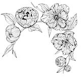 Vector Black and white background with flowers Stock Image