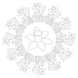 Vector black and white round spring mandala with flower daffodil - adult coloring book page. Vector black and white circular round spring mandala with flower Royalty Free Stock Image