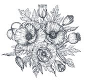 Vector floral composition of hand drawn poppy flowers Royalty Free Stock Images