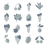 Vector black white gray icons of berries set. Silhouette black white gray vector icons of berries set. Isolated elements for web and apps design vector illustration