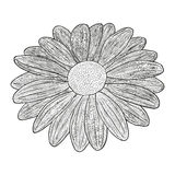 Vector black and white illustration of a flower Royalty Free Stock Photo