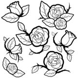 Black and white tattoo style roses and buds vector illustration
