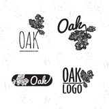 Vector black and white logo set with oak leaf and acorn Stock Photos