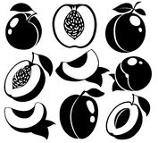 Vector black and white peaches and apricots Royalty Free Stock Photo
