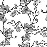 Vector black and white seamless pattern with orchid flowers Stock Image