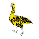 Vector black, white and yellow goose. Vector black, white and yellow serious goose Stock Images