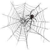 Vector Black Widow Spider on Spider Web. Stock Photos