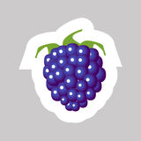 Vector Blackberry Icon. Vector Blackberry with White Contour Isolated on Grey Background Stock Photography
